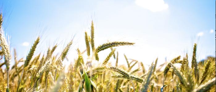 Поздравляем с днем сельского хозяйства!
